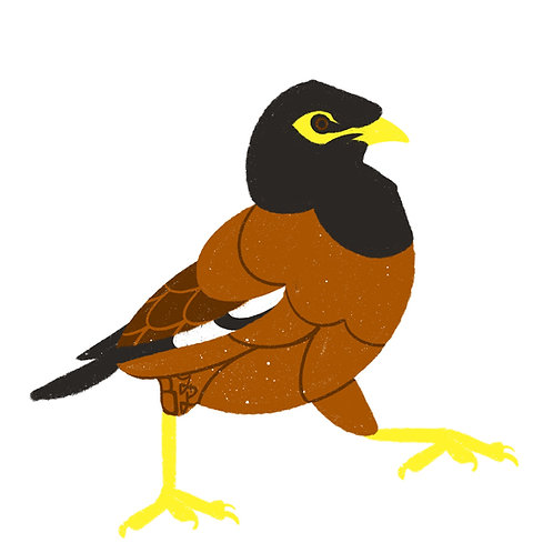 Myna Bird Stickers