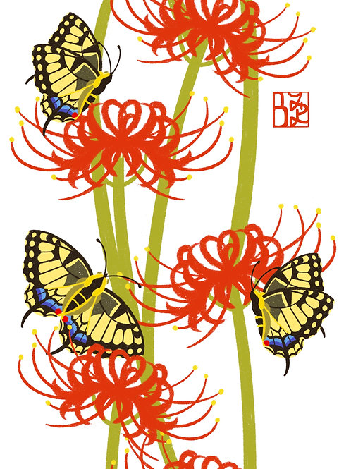 Red Spider Lillies Print