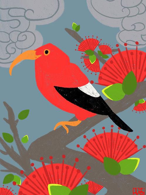 ʻIʻiwi &ʻŌhiʻa Lehua Print