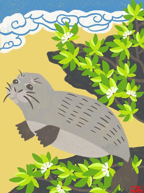 Monk Seal Print