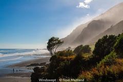 Noel Maitland_Windswept.jpg