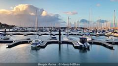 Mandy Milliken_Bangor Marina.jpg