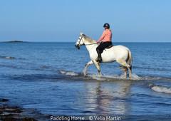 Velia Martin_Paddling Horse.jpg