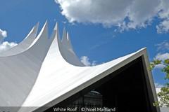 Noel Maitland_White Roof.jpg