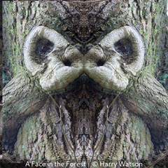 Harry Watson_A Face in the Forest.jpg