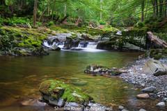 Nigel Snell_Shimna River.jpg