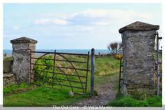 Velia Martin_The Old Gate.jpg