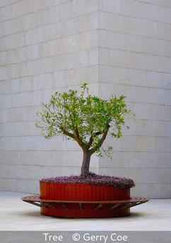 Tree - Gerry Coe