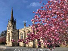 Mandy Milliken_Cherry Blossom Church.jpg