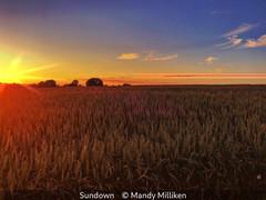 Mandy Milliken_Sundown.jpg