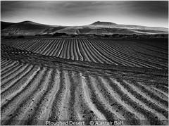 Ploughed Desert - Alastair Bell