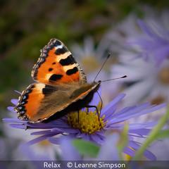 Leanne Simpson_Relax.jpg