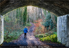Ray Magill - Walk In The Woods