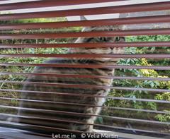 Velia Martin_Let me in.jpg