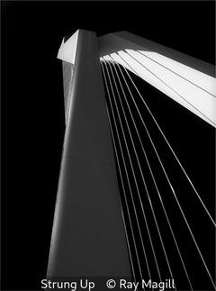 Ray Magill_Strung Up.jpg