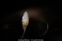 Judith Kimber_Knotted Wrack.jpg