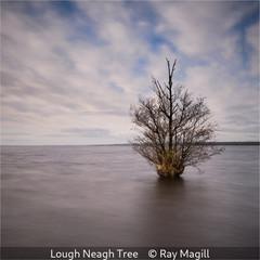 Ray Magill_Lough Neagh Tree.jpg