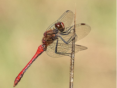 Roger Hance FRPS – Nature in Macro Photography