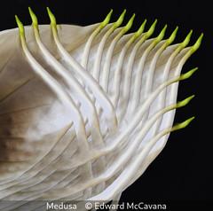 Edward McCavana_Medusa.jpg