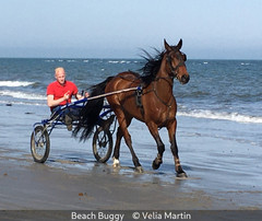 Velia Martin_Beach Buggy.jpg
