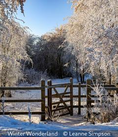 Leanne Simpson_Winter Wonderland.jpg