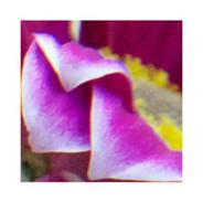 Petal Close Up #0543