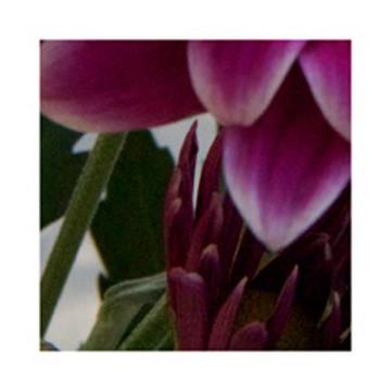 Purple Blooms #0536
