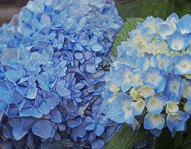 Plastic Hydrangea Blooms IMG_2887.jpg