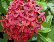 Red Flower #3566