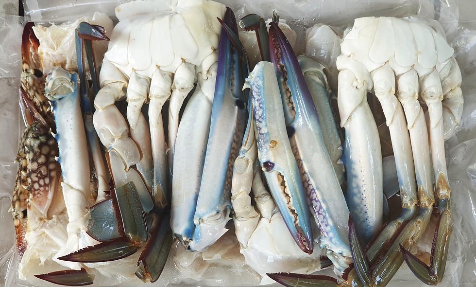 Blue Swimming Crab (800g)