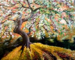 womantree