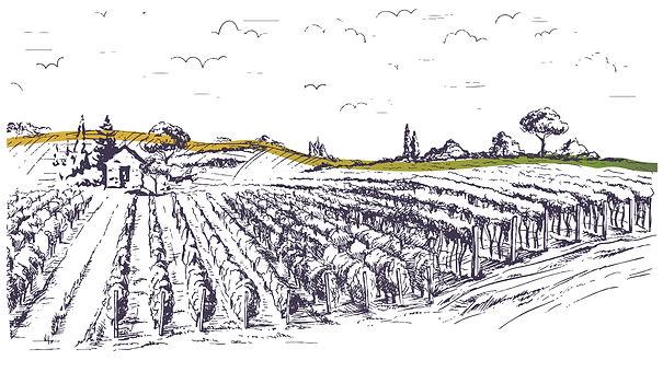 Vineyard Banner-01.jpg
