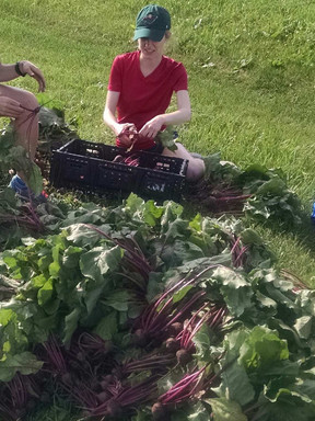 Lacy Food Pantry Garden.jpg