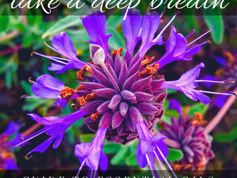 Take a Deep Breath - Gloguide to Choose and Use Essential Oils