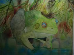 Rainbow-eyed Frog
