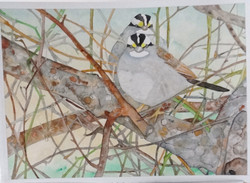 44 W.W. White Throated Sparrows 12 X 17