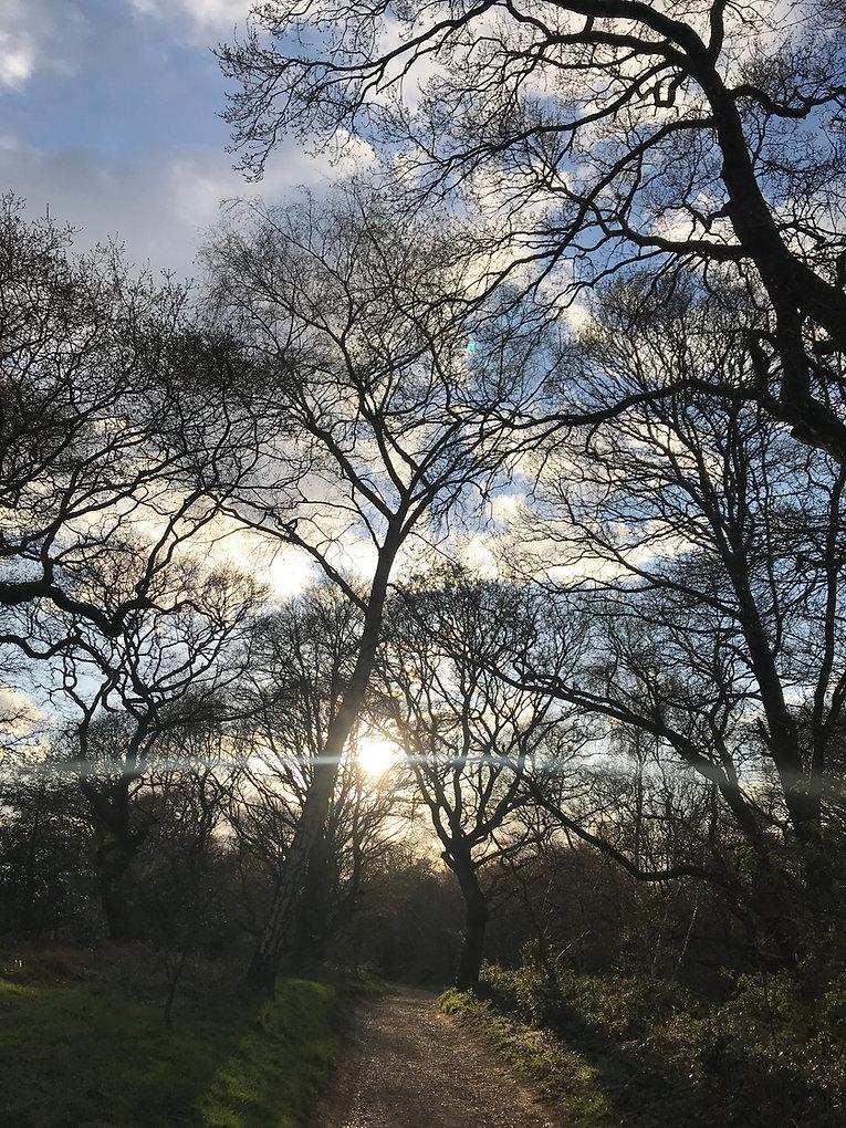 Website image - trees.jpg