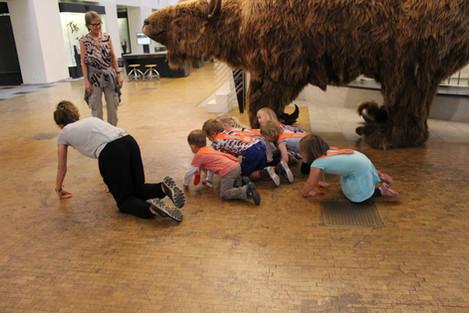 Besuch im Zoologischen Museum. Workshop Waldtiere. Juni 2018