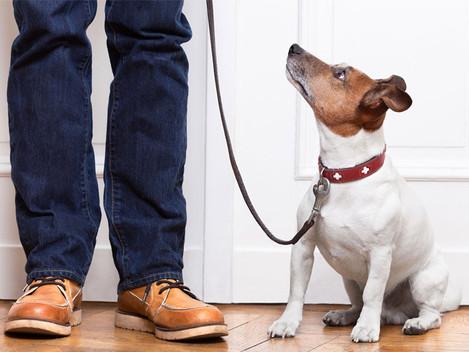 Pets em condomínios, pode ou não pode?