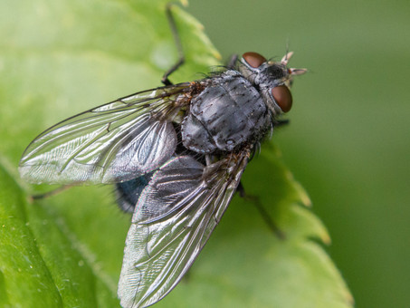 Dicas de prevenção: como evitar moscas.