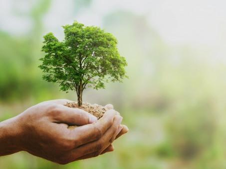 Está chegando o dia mundial do meio ambiente