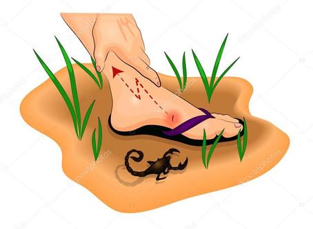 O que fazer quando for picado por escorpião?