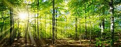 Naturerfahrung_Klein.png