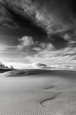 StephanieAmes_A Walk on the Dunes
