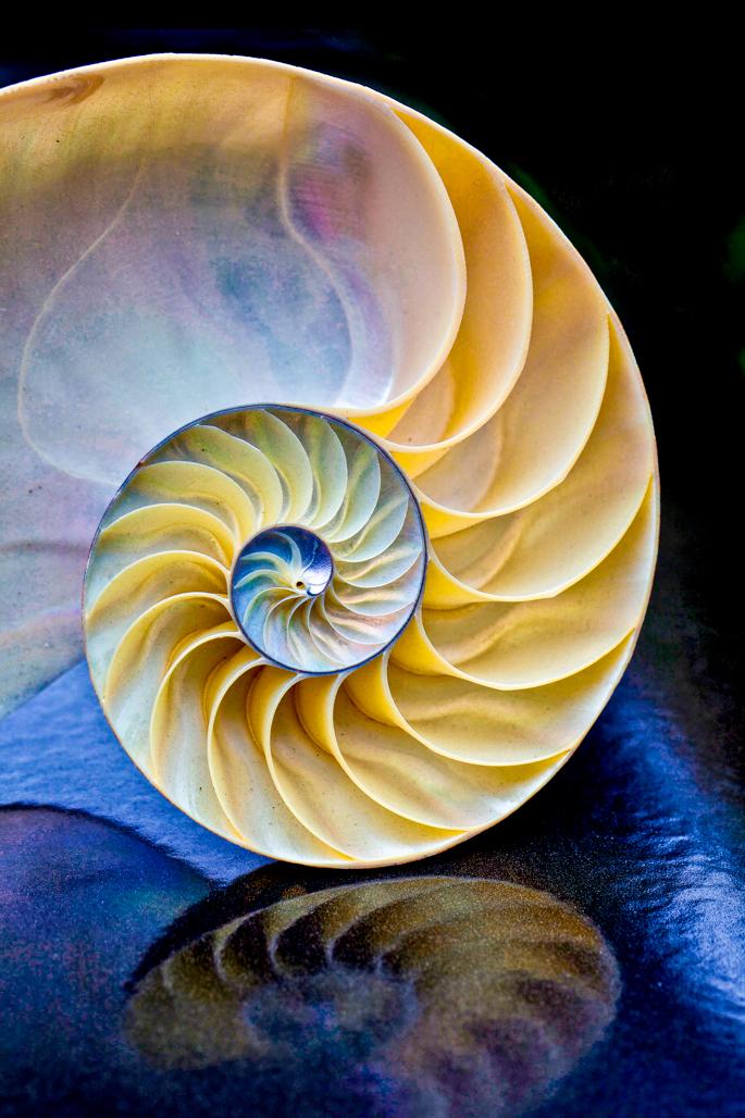 StephanieAmes_Ocean's Infinity