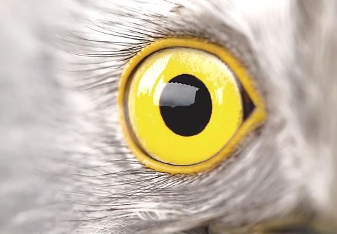bird%20eye%20close-up%2C%20macro%20effec