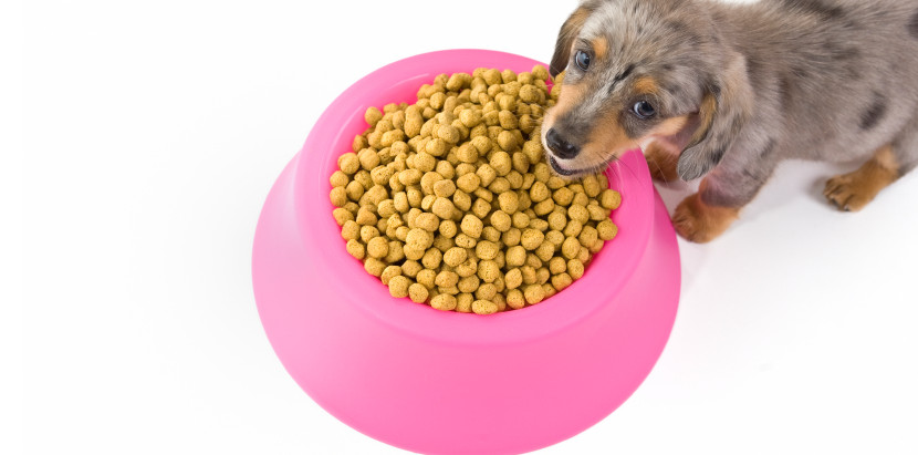 Pet Food and Pentobarbital...What Does It Mean?