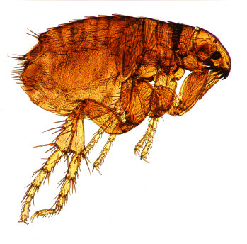 Don't Let Fleas and Ticks BUG You or Your Pets!