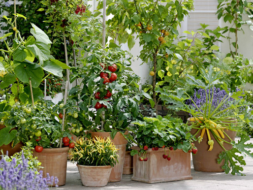 10 Easy Ways to Create an Eco-friendly Garden
