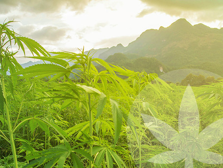 The world is changing its attitude towards CBD